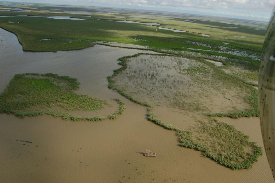 State Seeks Help Of Hunters Fishermen To Control Roseau