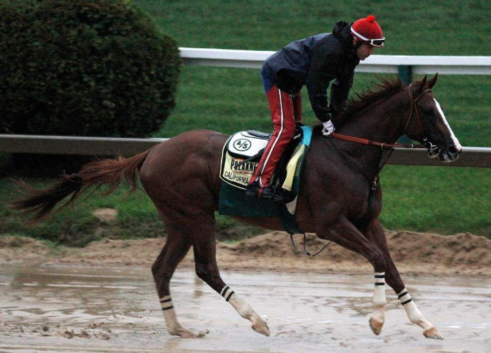 California Chrome looks golden as Preakness arrives _lowres