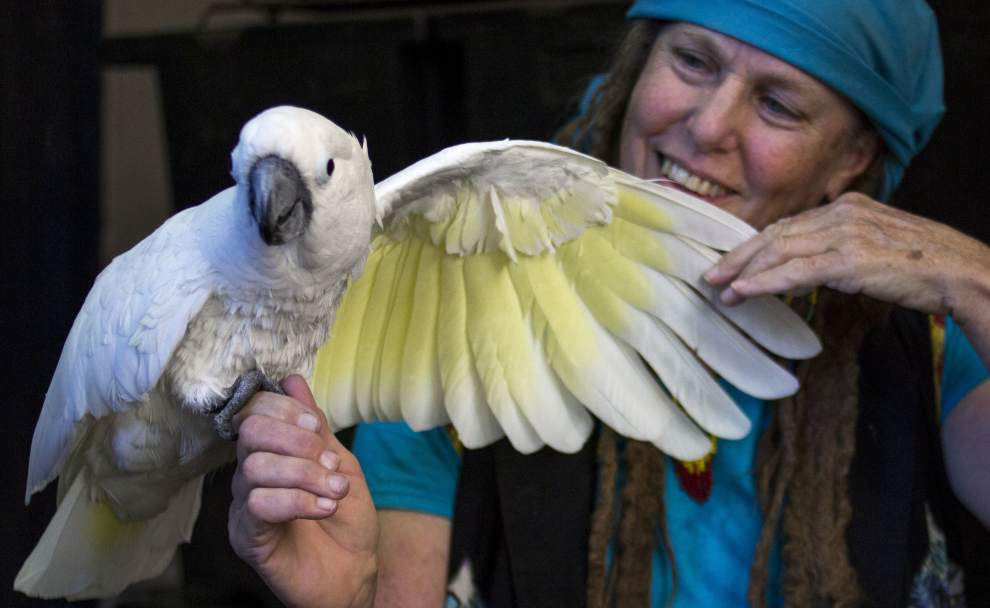 In New Orleans' French Quarter, a cockatoo named Iko holds court _lowres