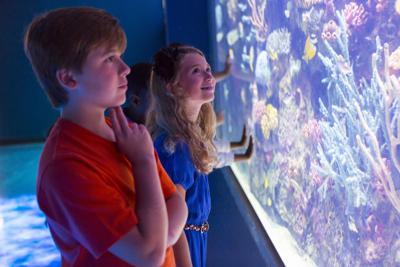 shreve aquarium