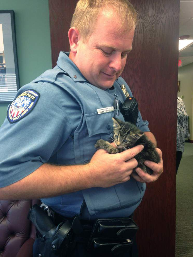 'Miracle' kitten rescued by police on Lake Pontchartrain Causeway _lowres