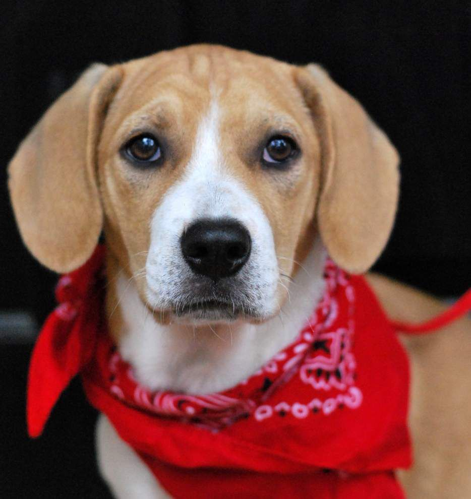 Southside pets available for Jan. 8, 2015 _lowres