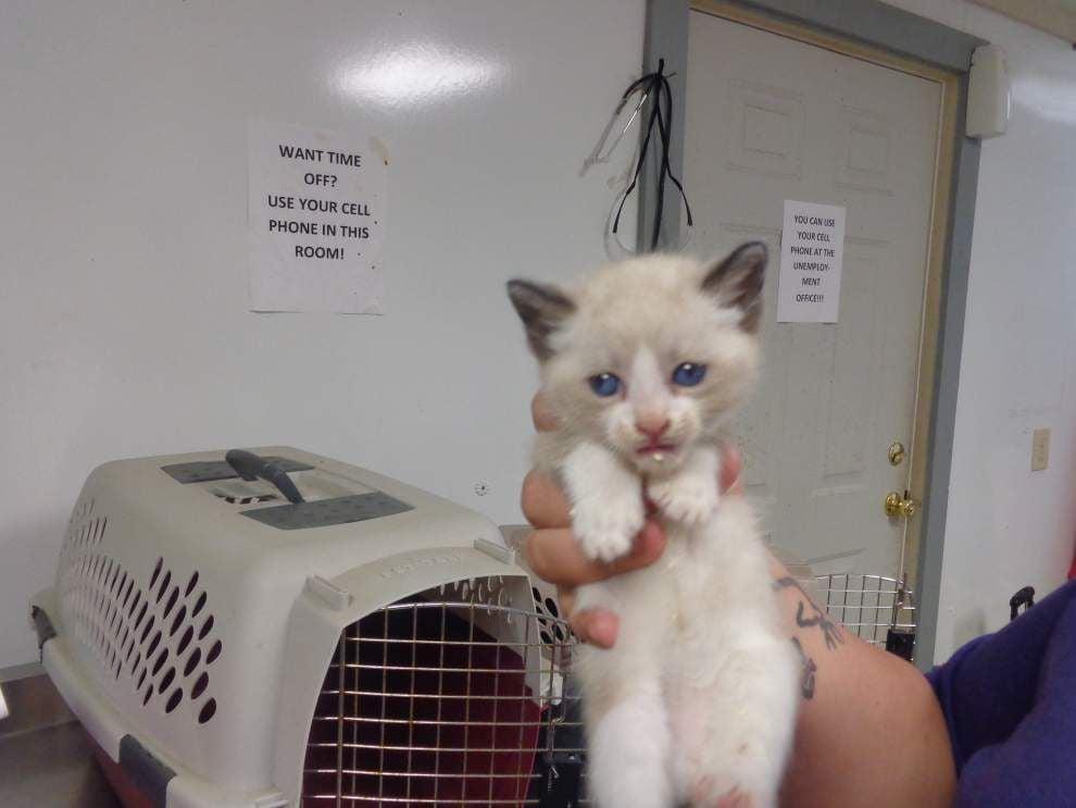 Livingston-Tangipahoa pets available for June 5-12, 2014 _lowres