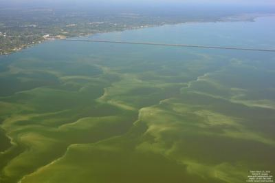Stay Out The Water Bacteria Close All Mississippi Gulf Coast