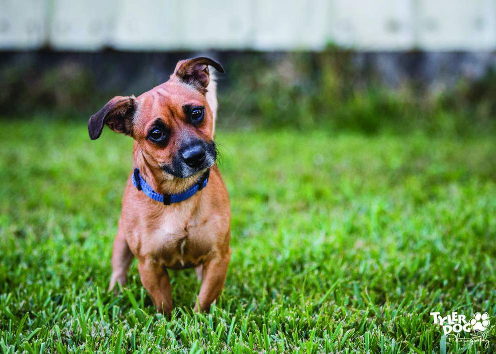 Animal rescue: Routine crucial to housetraining dogs _lowres
