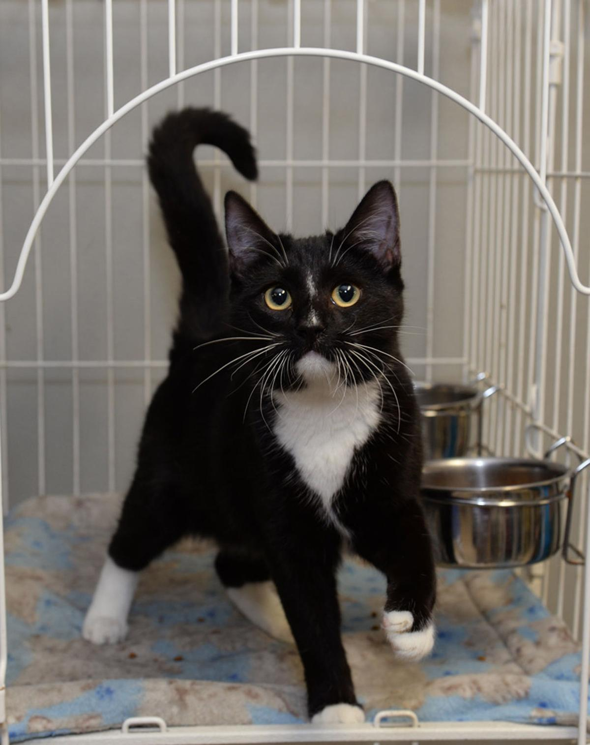 Cat Haven-Oreo.jpg