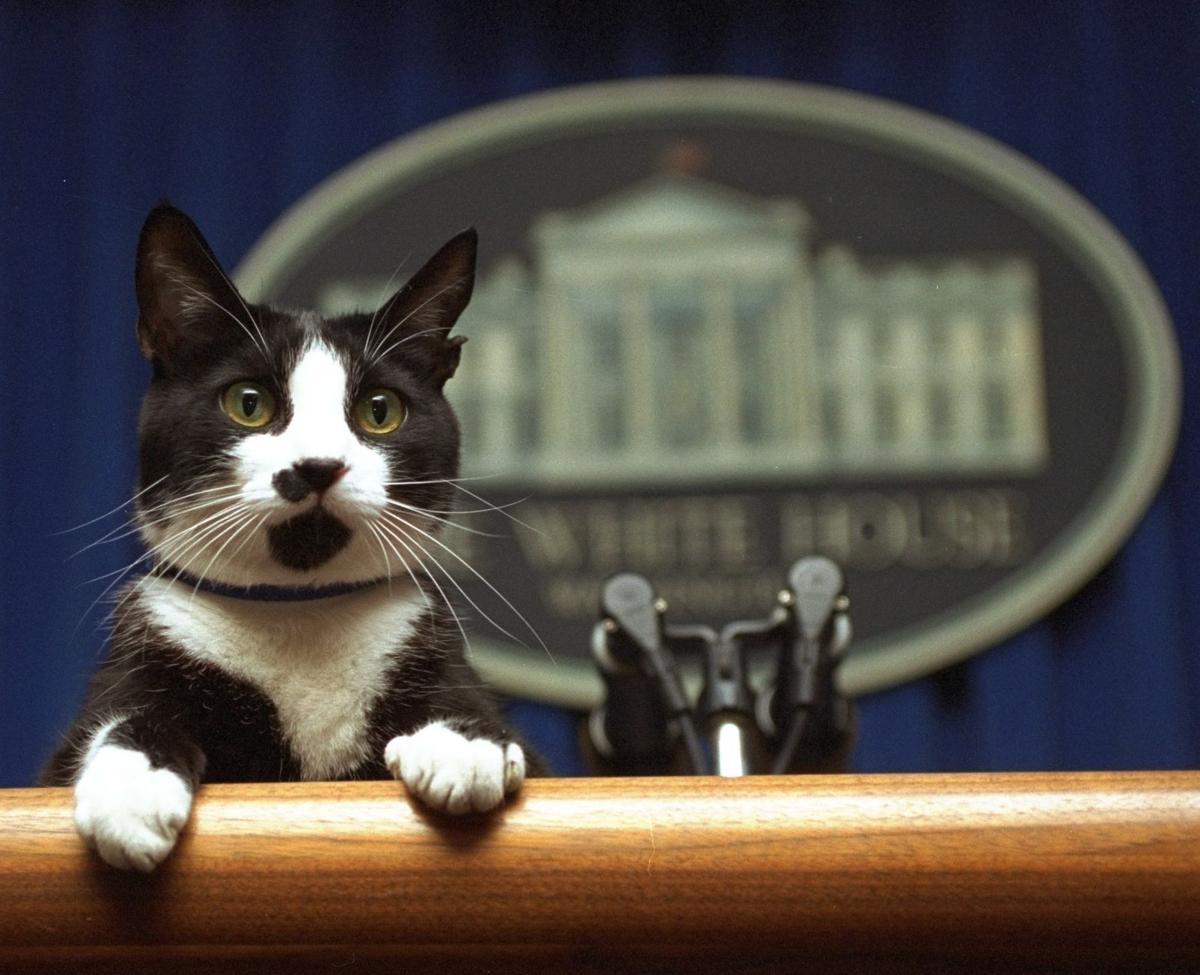 Trump First Pet