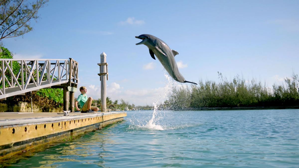 times Dolphin1.jpg