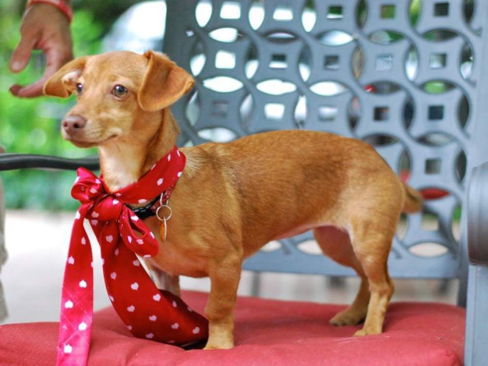 Southside pets available for July 17, 2014 _lowres