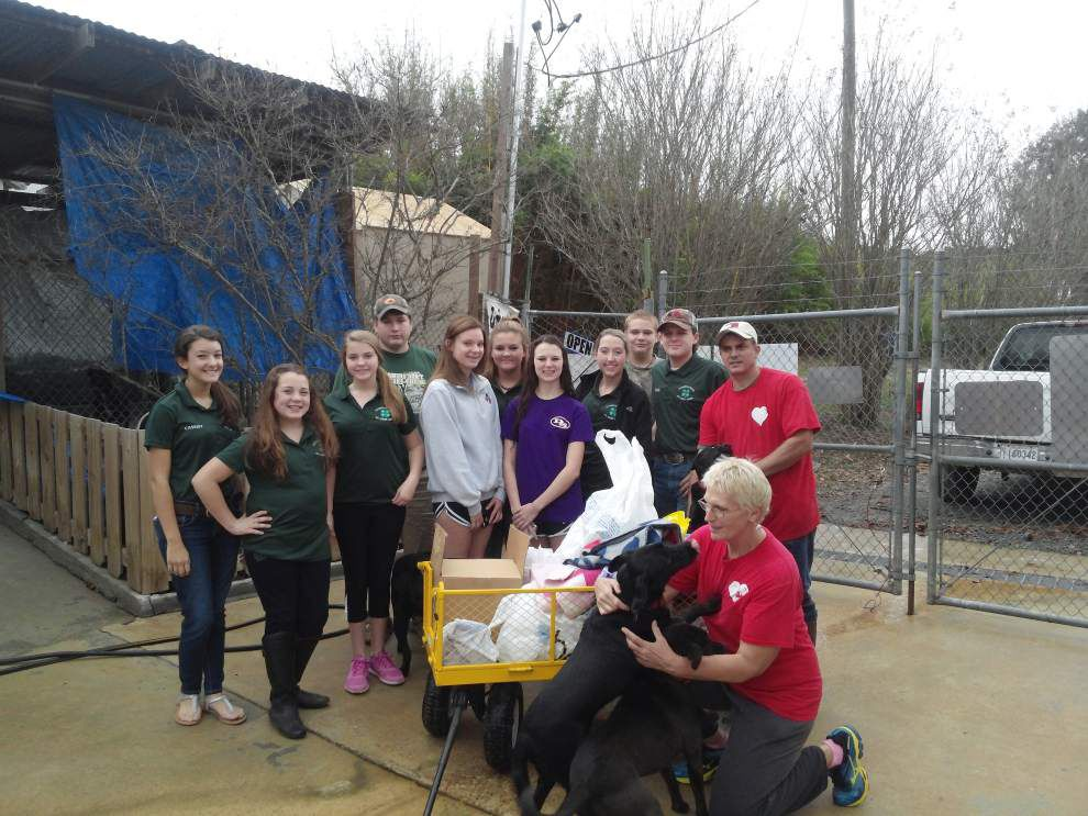 Service day goes to the dogs _lowres