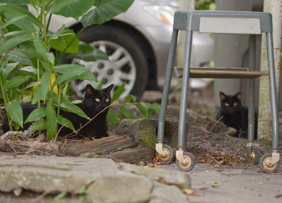 Stray cats to get second chance on Baton Rouge's streets _lowres