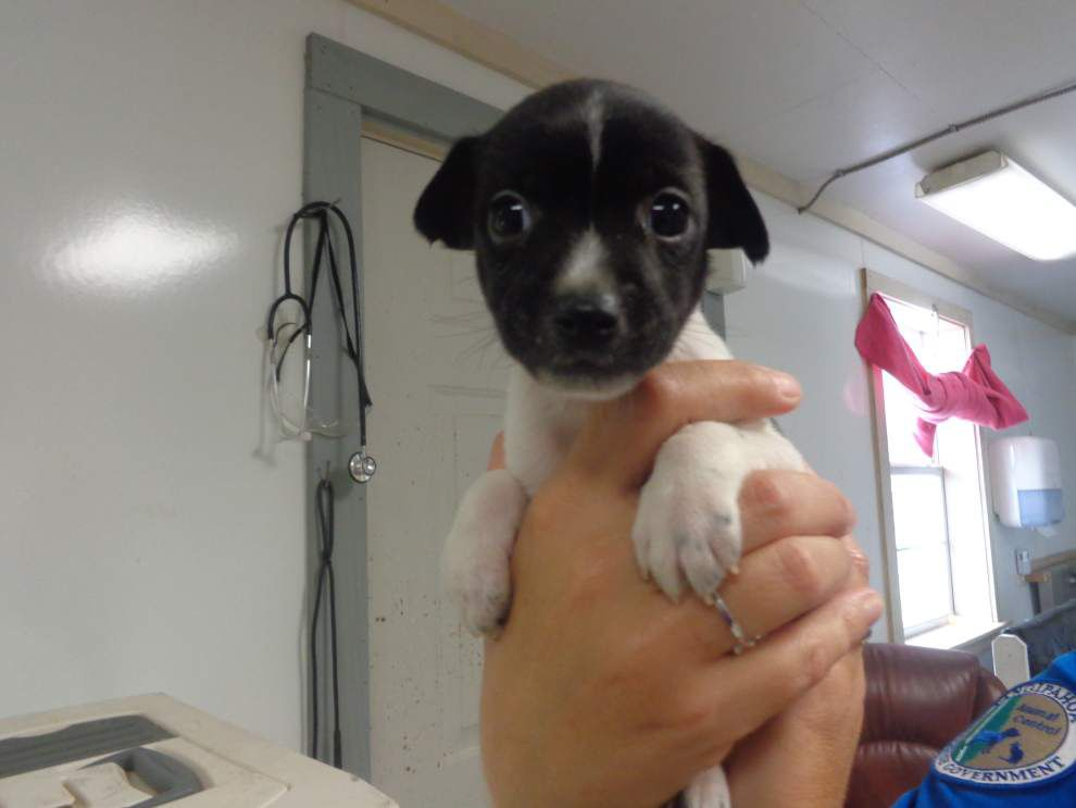 Livingston-Tangipahoa pets available for May 8, 2014 _lowres