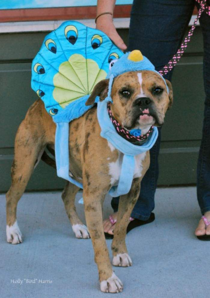 Southside pets available Oct. 30, 2014 _lowres