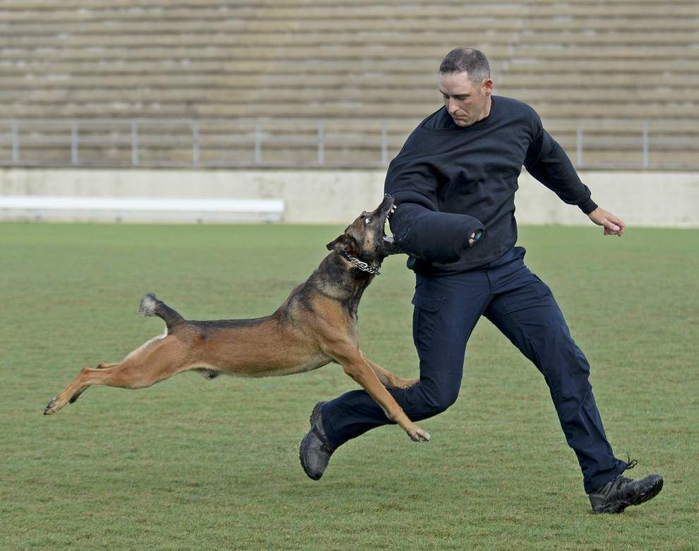 Photos, video: Police canine skills showcased in Baton Rouge event _lowres