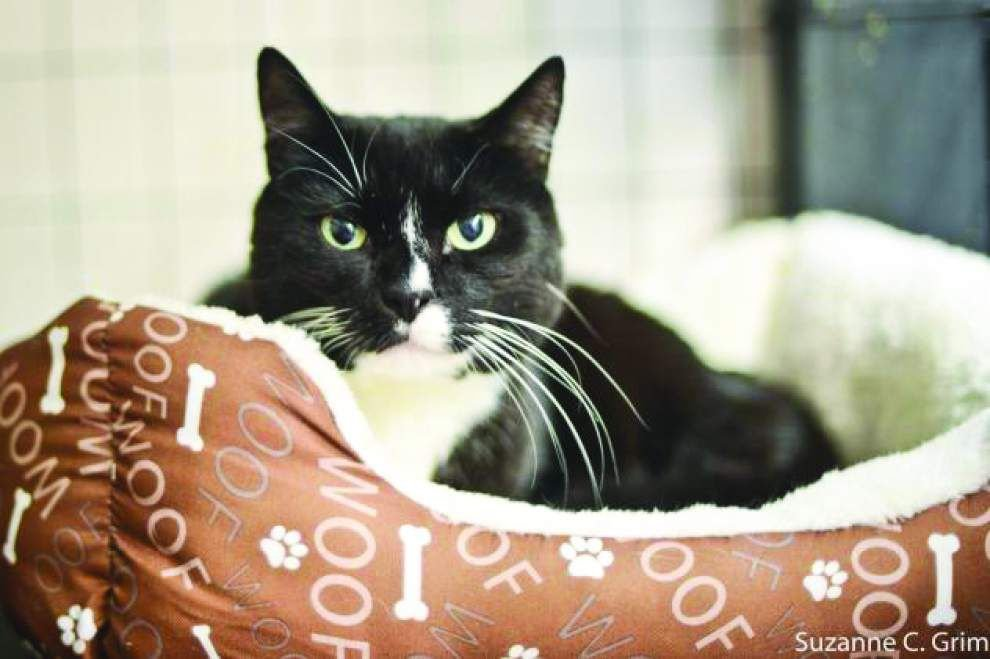 Animal Rescue: Spring brings overabundance of kittens _lowres