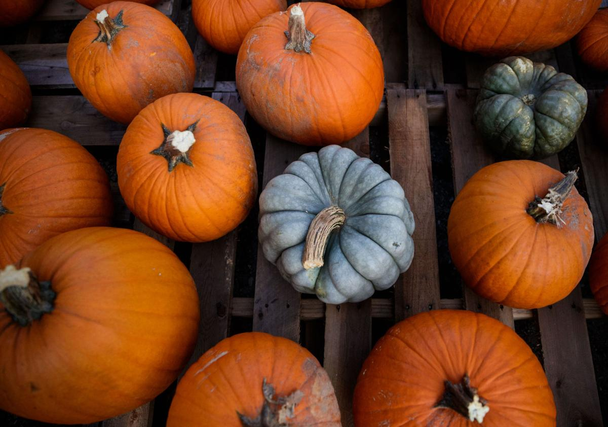 pumpkin.nc.102517.003.JPG