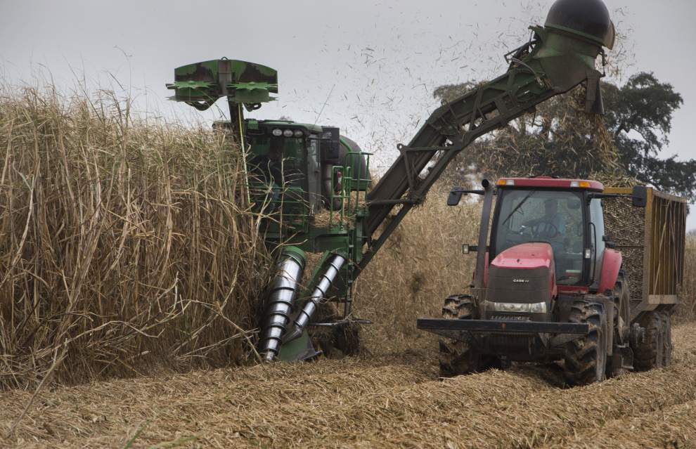 Uneven sugarcane harvest may be offset, somewhat, by low fuel costs _lowres