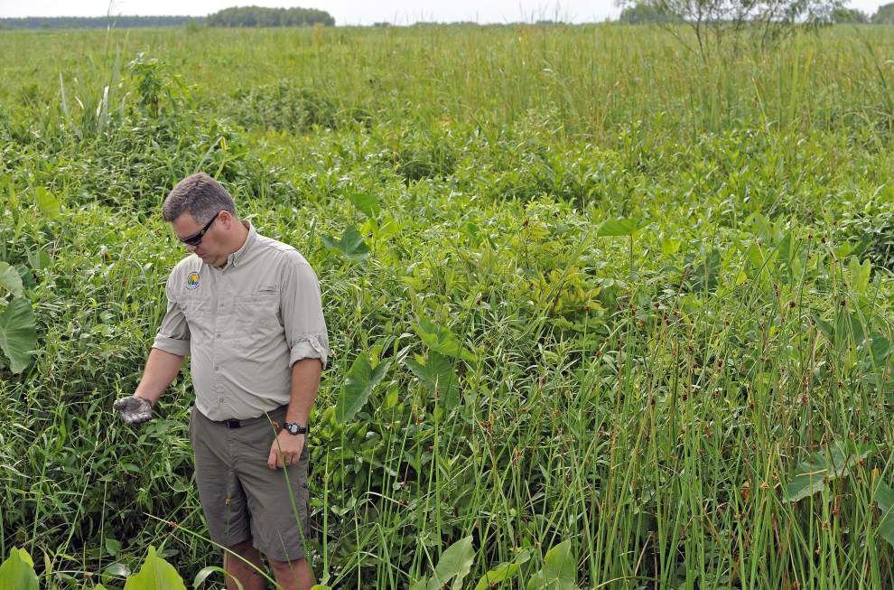 'Accidental' rebuilding of Wax Lake Delta shows promise of diversion projects _lowres