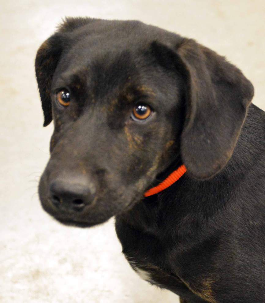 East Feliciana pet available for Dec. 4, 2014 _lowres