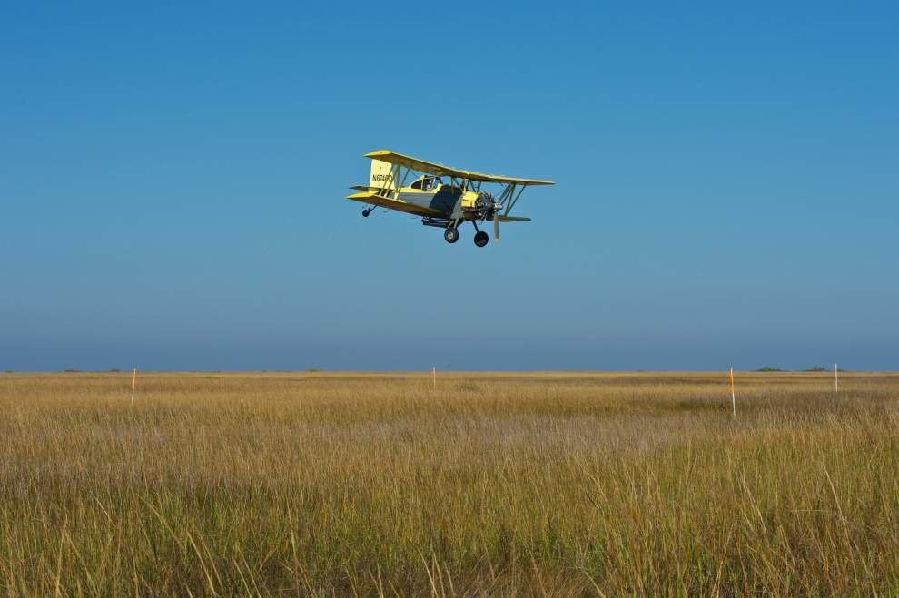 Aerial planting of mangrove seeds proving to be effective method of protecting struggling marshes in Louisiana _lowres