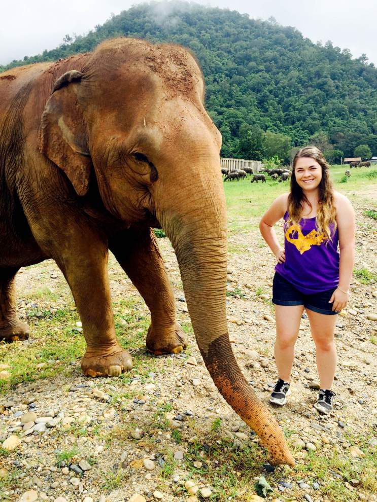 Student gets experience working on elephants _lowres