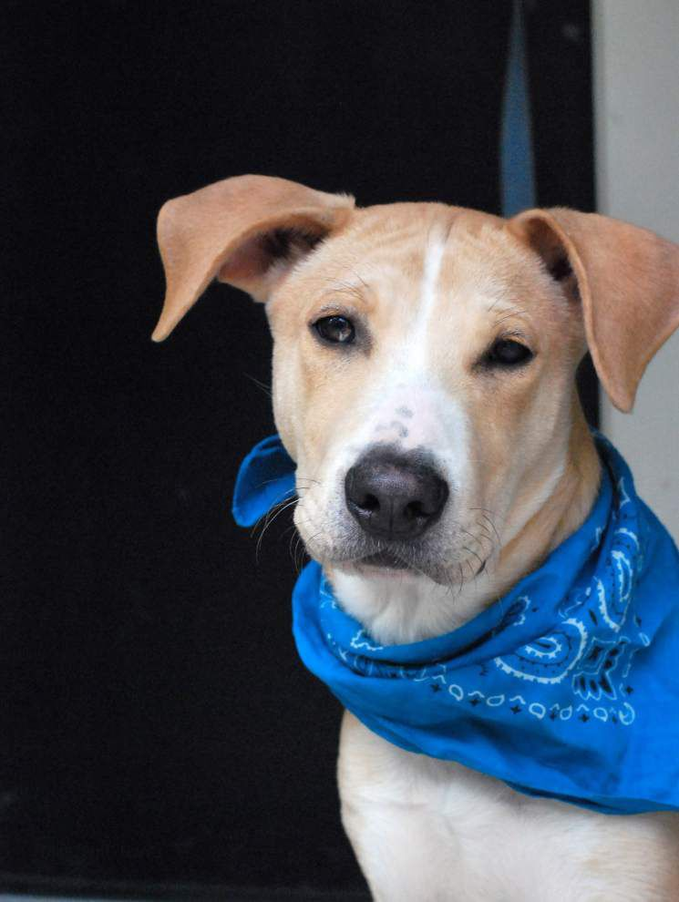 Southside dogs available for Nov. 27, 2014 _lowres