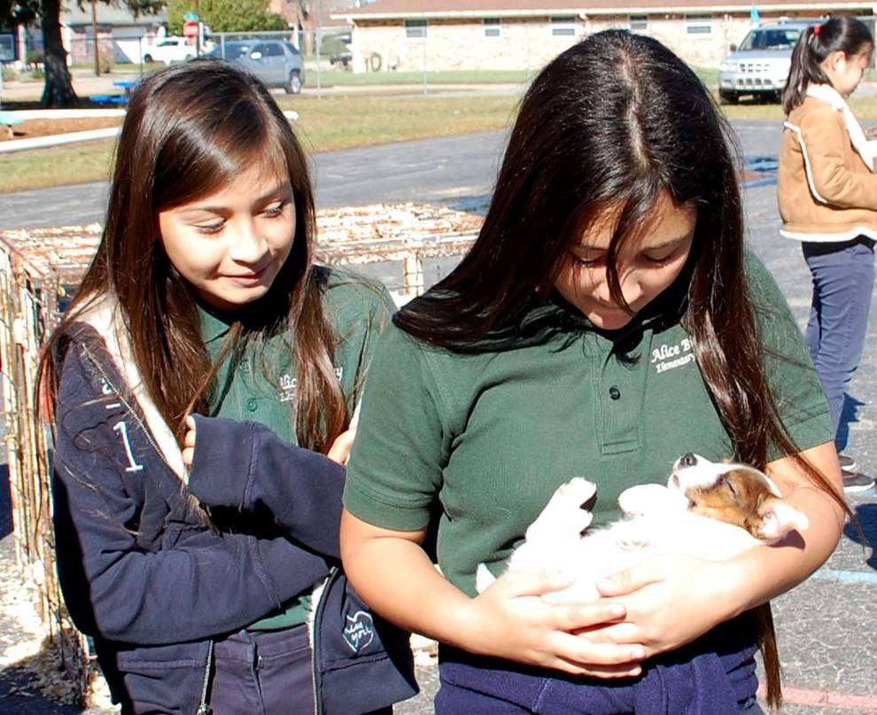 Metairie students get to mingle with farm animals _lowres