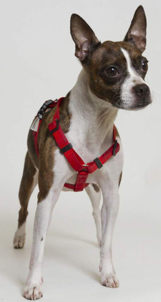 Southeast dogs available for Dec. 17, 2015 _lowres