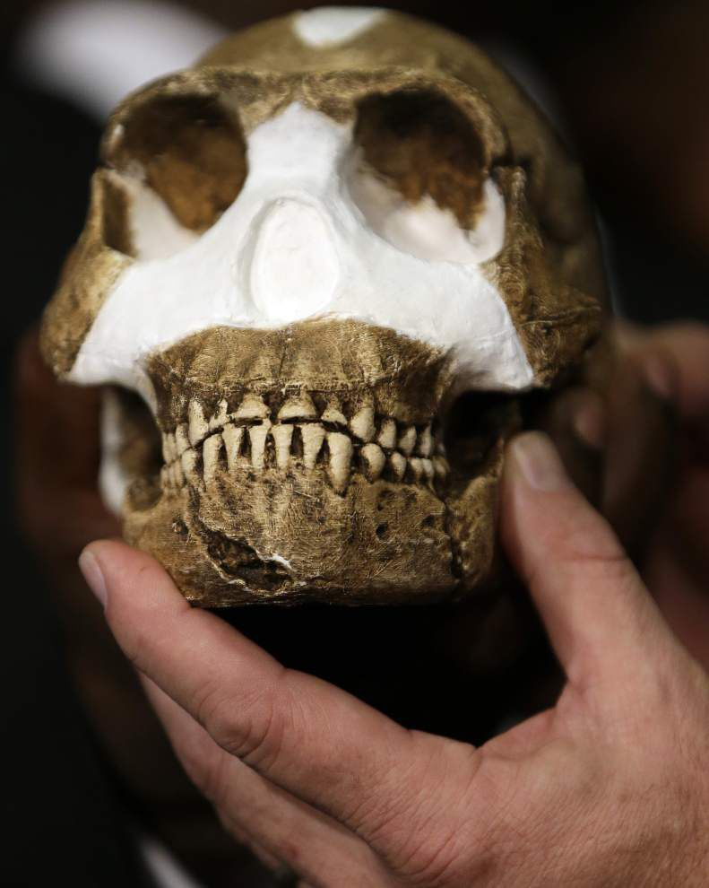 Tulane scientist part of team studying newly found ancient human relative _lowres
