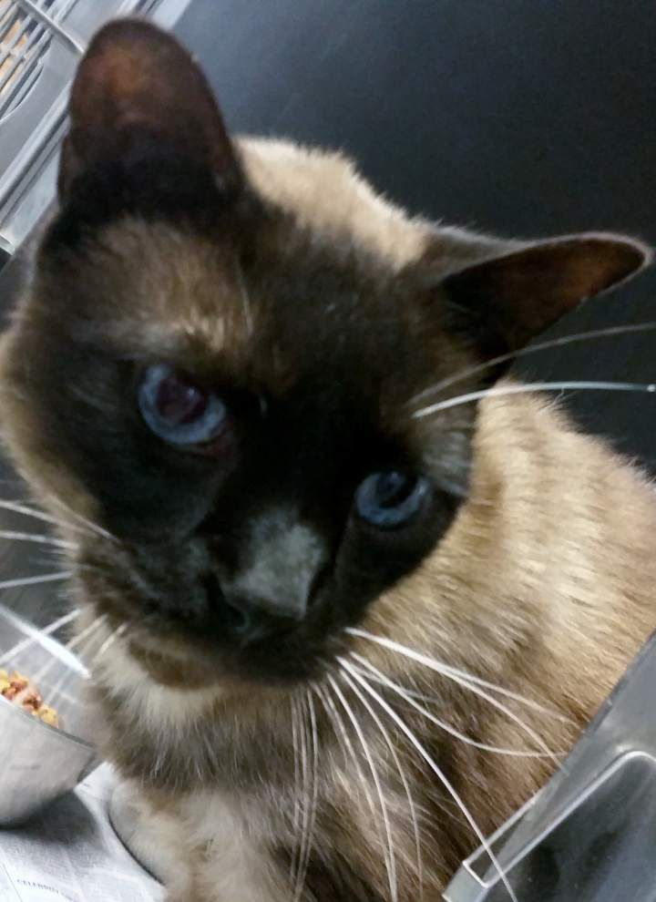 Ascension Parish pets available for May 22, 2014 _lowres