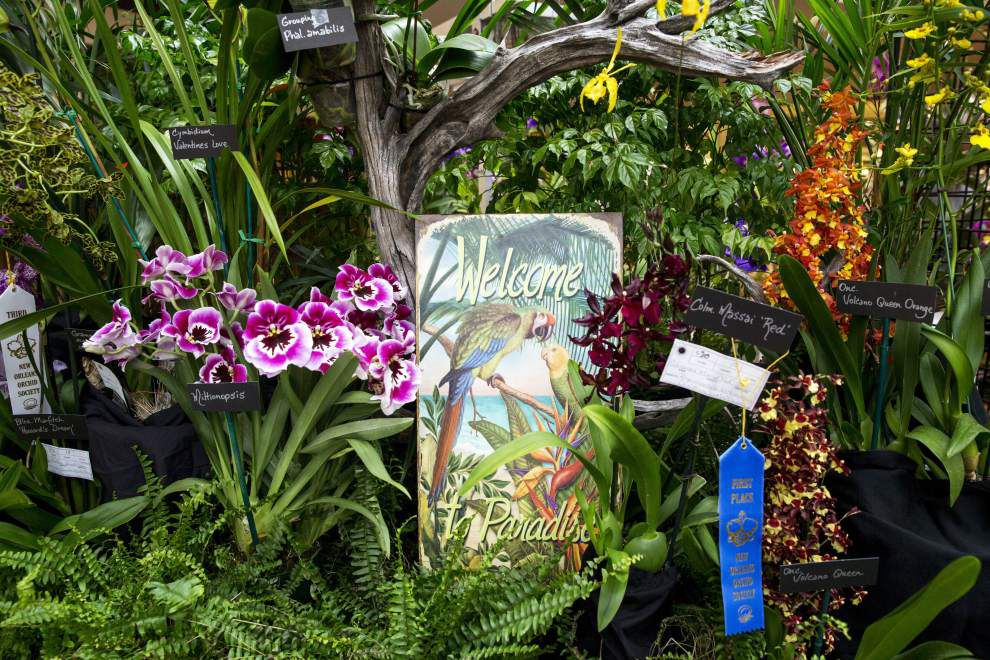 Photos: New Orleans Orchid Show _lowres