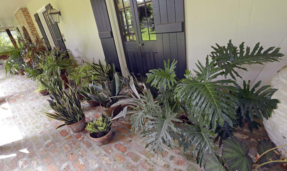 Retired cardiologist covers Prairieville land with plants that naturally reproduce, require little maintenance _lowres