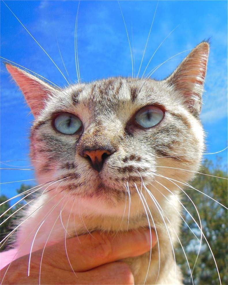 West Feliciana pets available for Oct. 30, 2014 _lowres