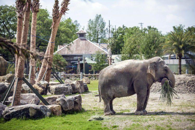 Audubon Zoo gaining bi...