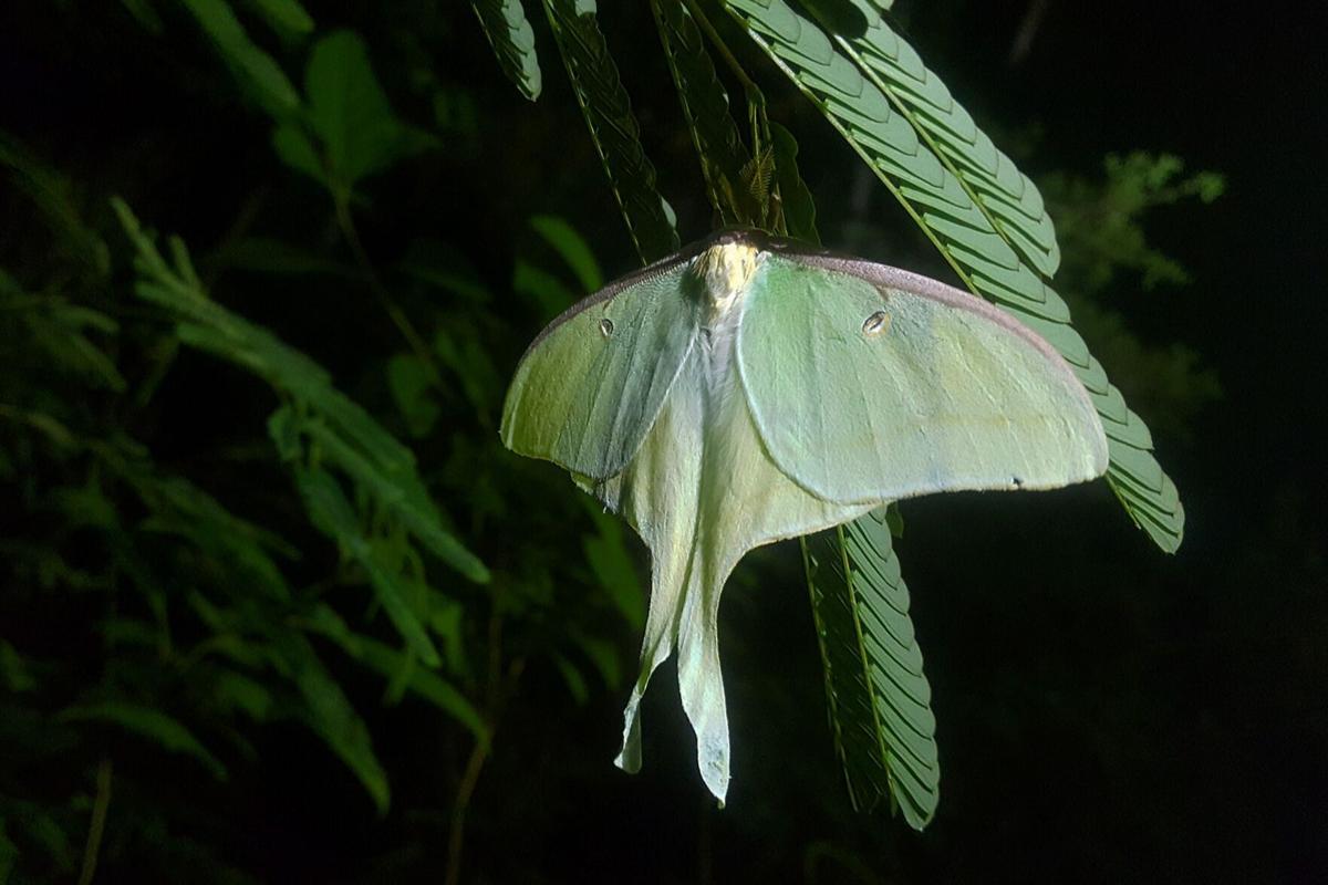 moth 6.jpg