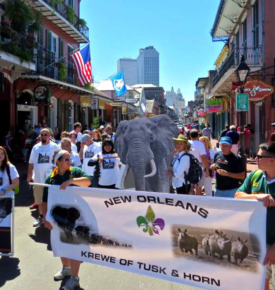 Tusk and Horn  Krewe parades, sponsors other events to provide help for endangered animals _lowres