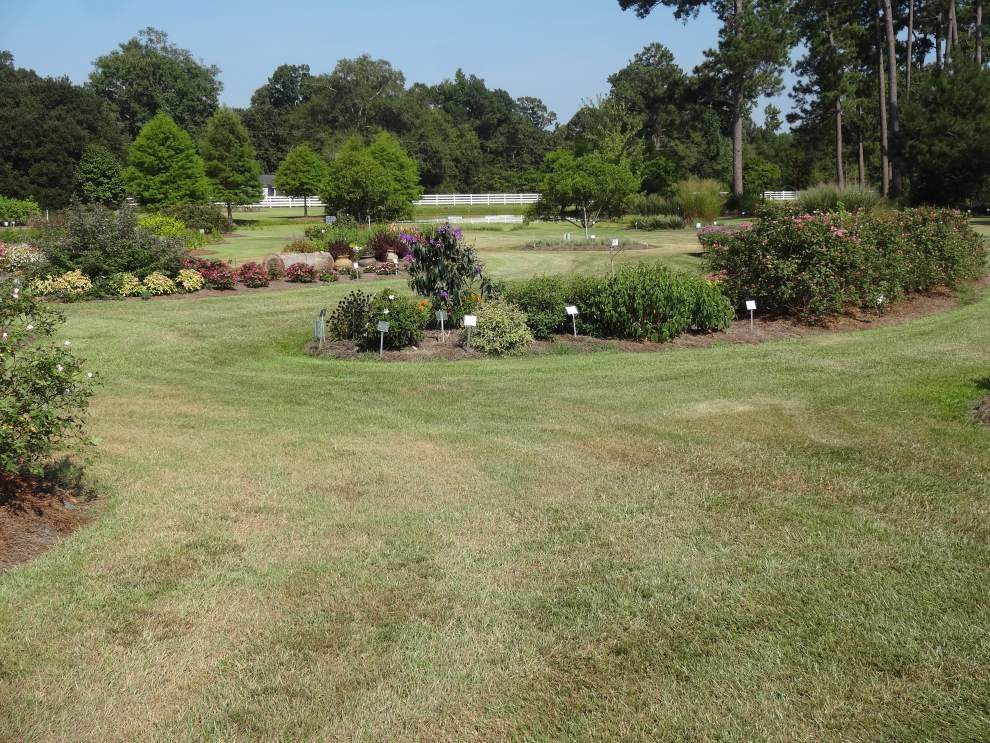 Garden news: Watch for drought stress, chinch bugs _lowres