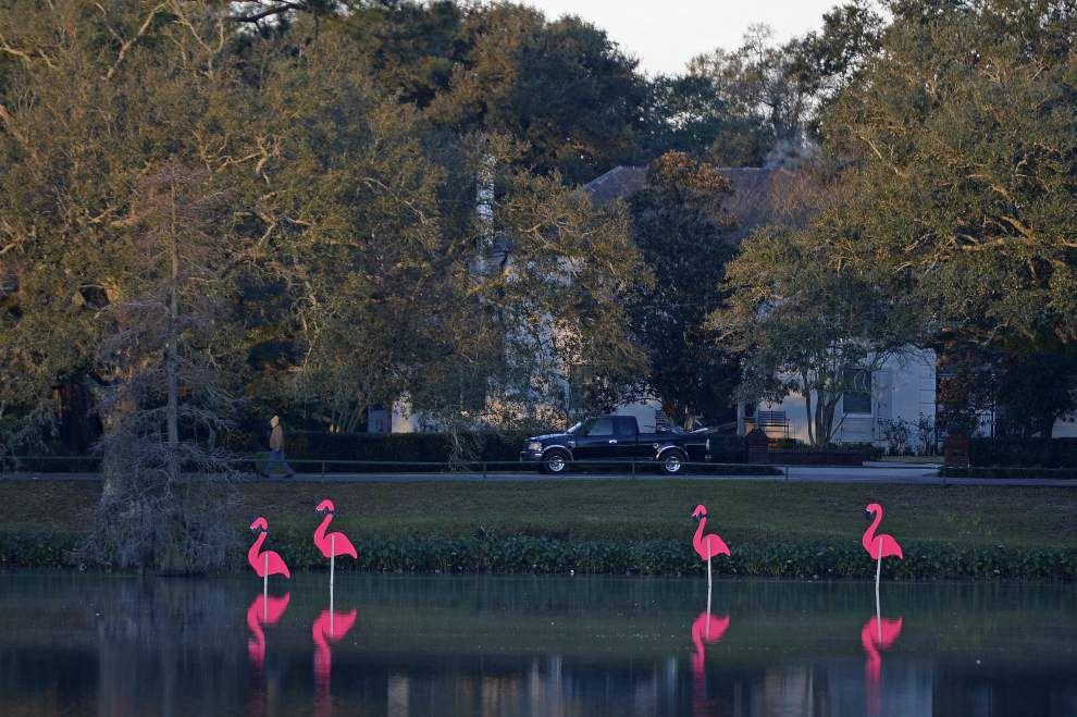 Photos: Pink flamingos make annual migration to Baton Rouge -- heralding upcoming Spanish Town Parade _lowres