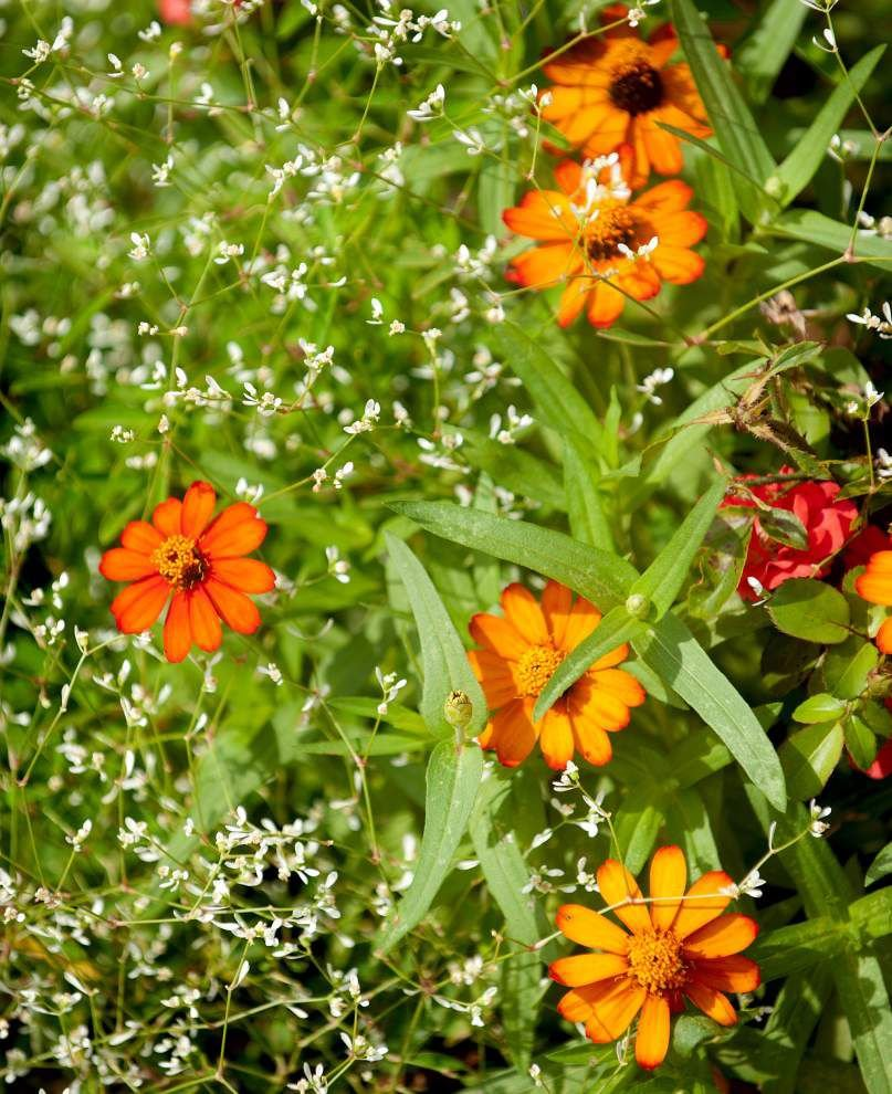 Metairie garden thrives in hottest part of year _lowres