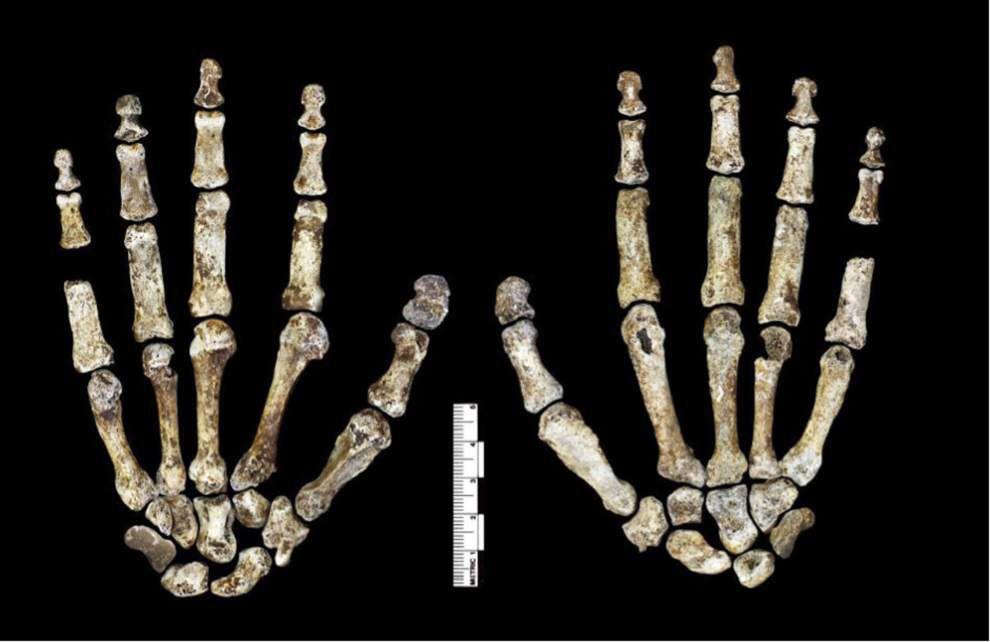 LSU professor among researchers who identified new human species, Homo naledi _lowres