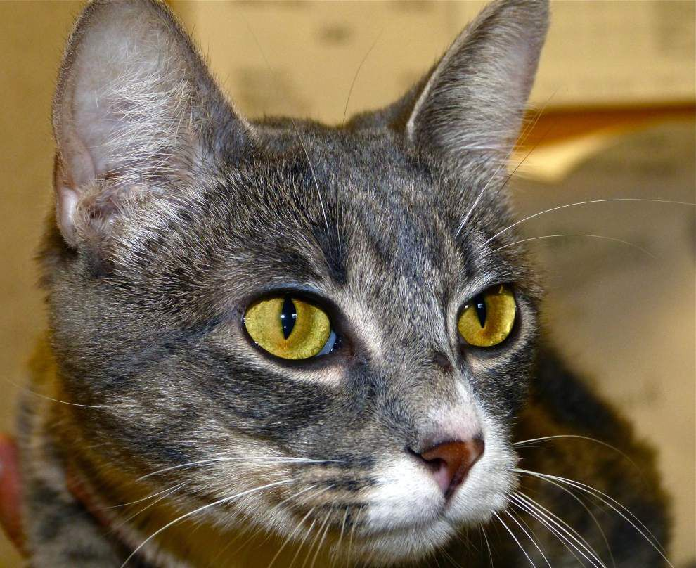 West Feliciana pets available for May 21, 2015 _lowres