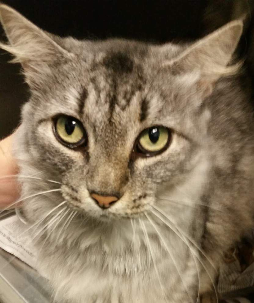 Ascension Parish pets available for July 31, 2014 _lowres