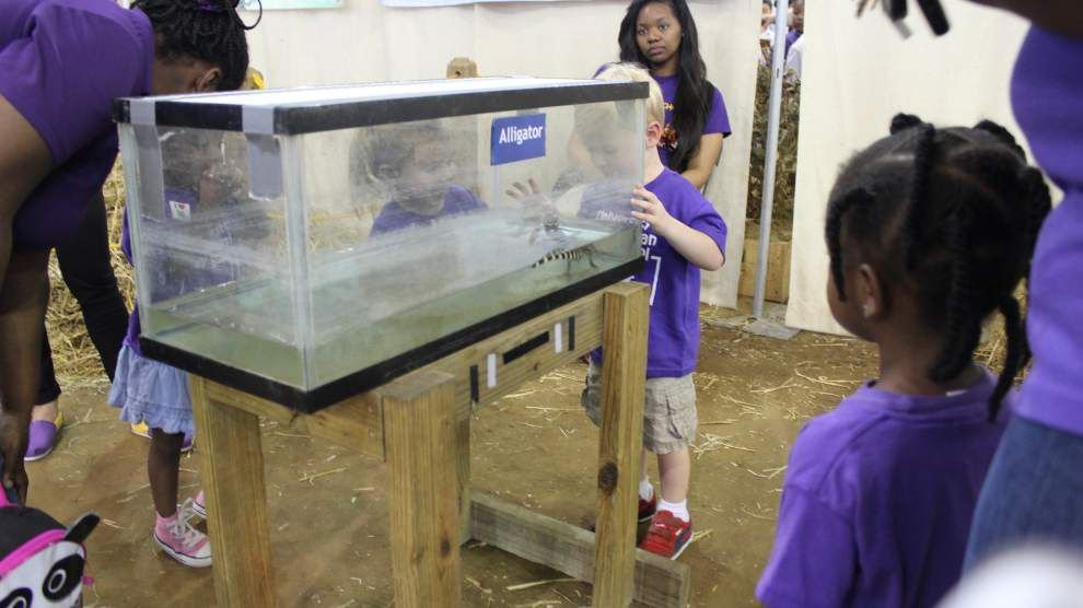 Agriculture exhibits at LSU give children hands-on lessons _lowres