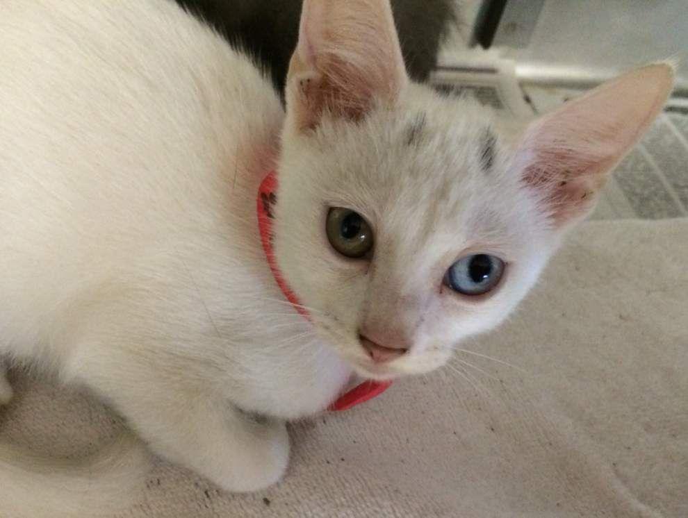 Livingston-Tangipahoa pets available for July 24, 2014 _lowres