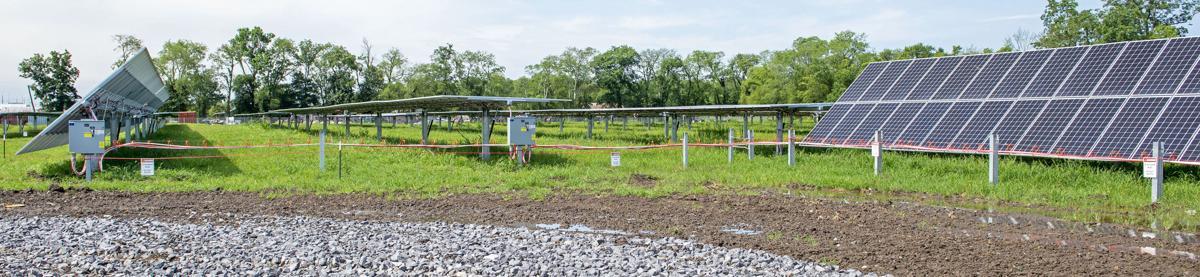BR.solarfarm.061120. 0055 bf.JPG