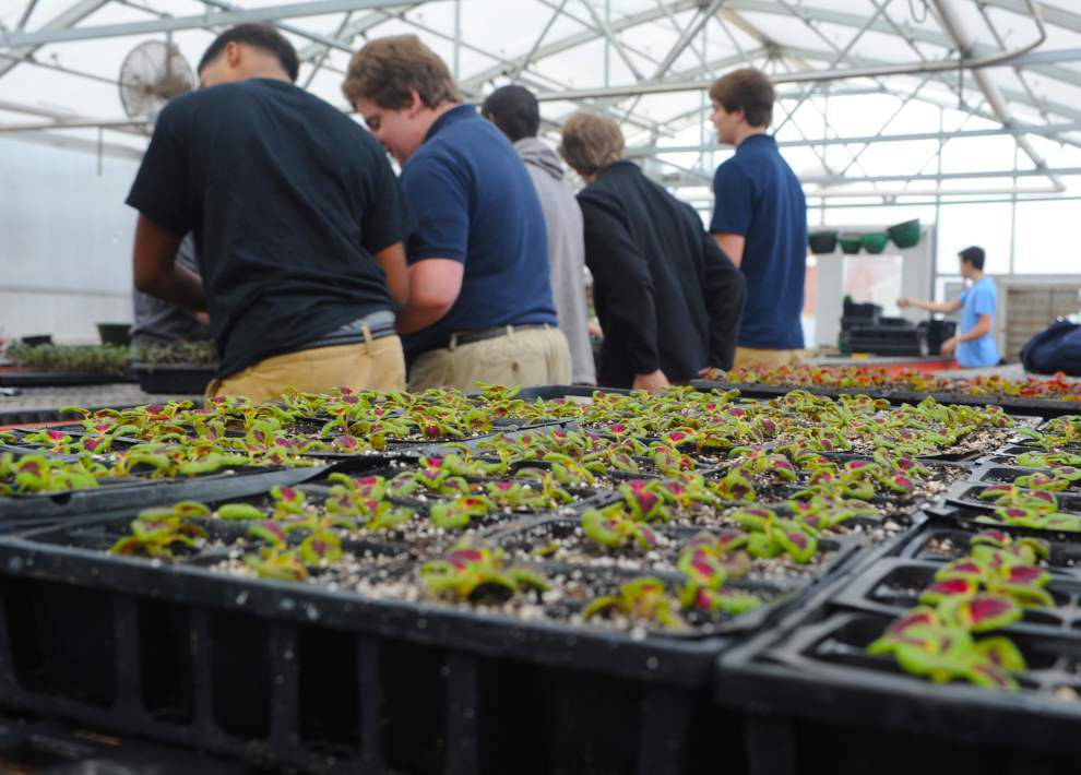 Students prepare for annual plant sale _lowres