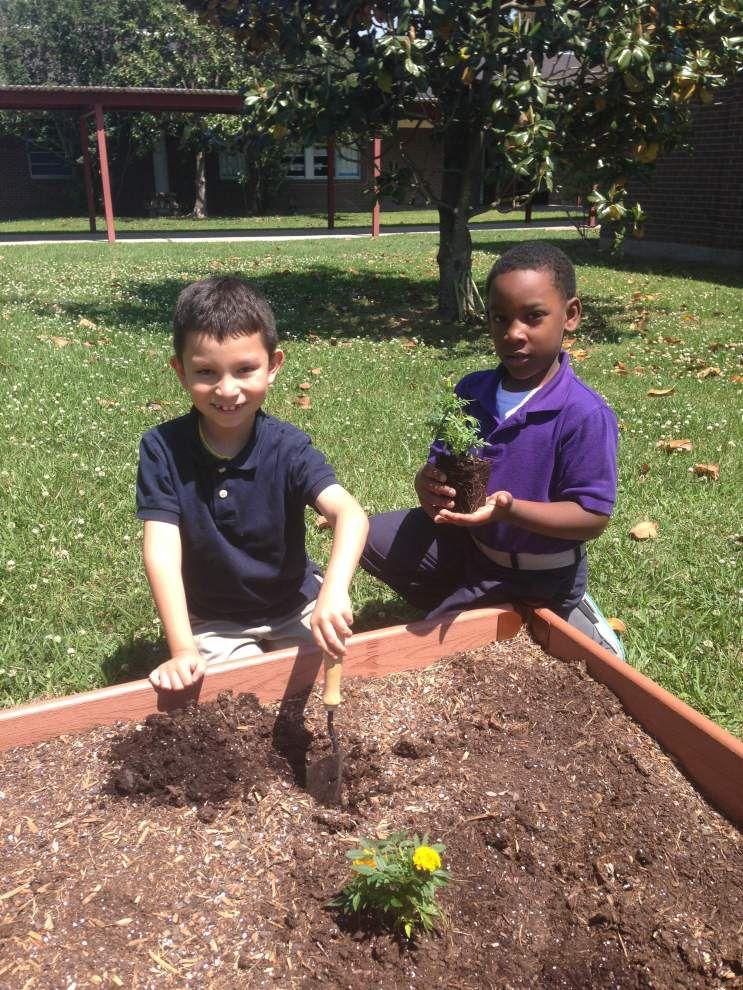 Students explore planting, harvesting _lowres
