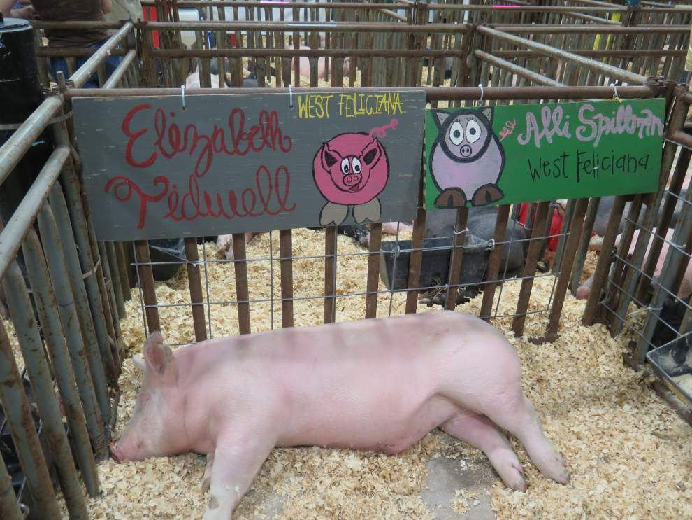 4-H'ers compete at state livestock show _lowres