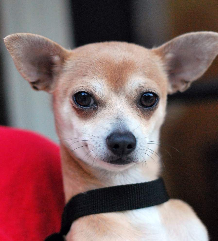 Southside pets available for Dec. 18 2014 _lowres