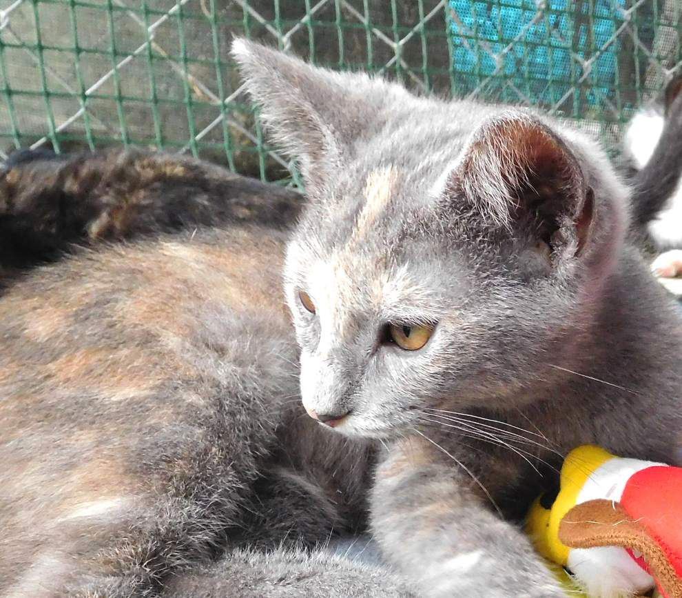 West Feliciana pets available for Aug. 13, 2015 _lowres
